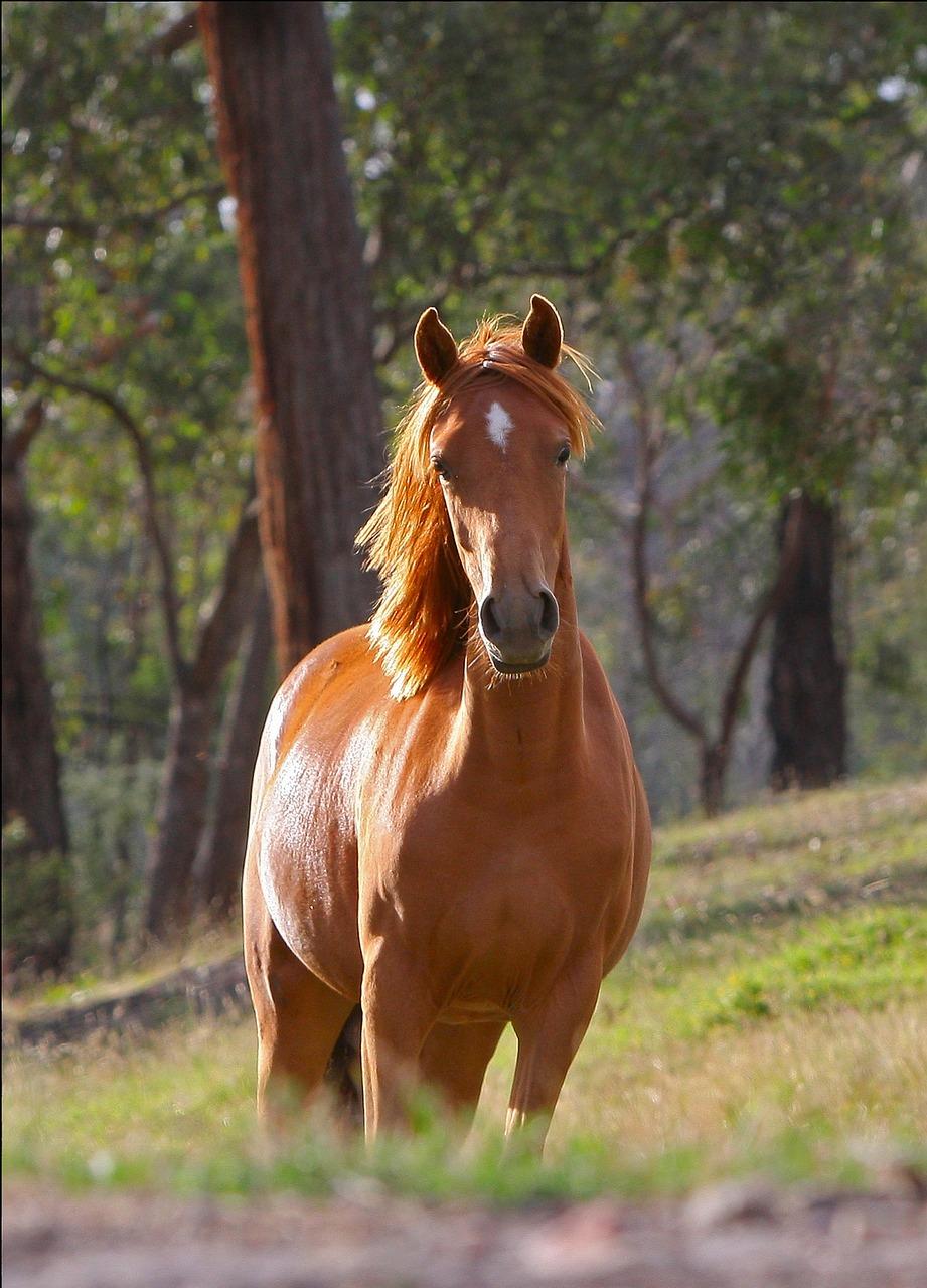 horse-51738_1280